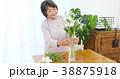花を生けるシニア女性 38875918