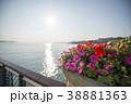 海岸沿いの花壇 38881363