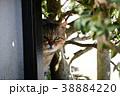 視線。そっと人間を見張っている猫さん。地域猫 38884220