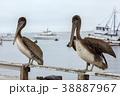 港 湾 くちばしの写真 38887967