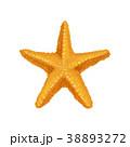 海 星 ベクタのイラスト 38893272