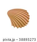 海 貝 貝がらのイラスト 38893273