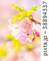桜 葉桜 春の写真 38894337