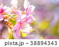 桜 葉桜 春の写真 38894343