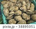 貝 はまぐり 38895051