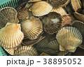 貝 はまぐり 38895052