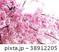 春爛漫/桜 38912205