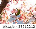 メジロと春/桜の蜜 38912212