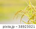 秋の稲 (9月) 38923021