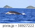 慶良間諸島のホエールウォッチング 38927222