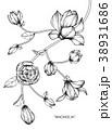 フローラル モノクロ 白黒のイラスト 38931686