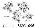 モノクロ 白黒 ベクターのイラスト 38931696