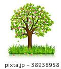 樹木 樹 ツリーのイラスト 38938958