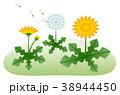 タンポポ 春のイメージ 38944450