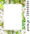 背景-花-フレーム 38948980