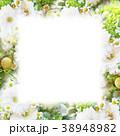 背景-花-フレーム 38948982