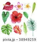 南国 ハワイ 植物のイラスト 38949259