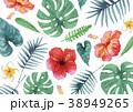 南国 ハワイ 植物のイラスト 38949265