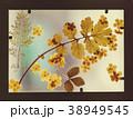 乾燥 植物学 切れたの写真 38949545