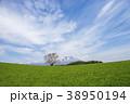 小岩井農場 一本桜 桜の写真 38950194