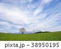 小岩井農場 一本桜 桜の写真 38950195