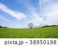 小岩井農場 一本桜 桜の写真 38950198
