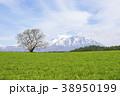 小岩井農場 一本桜 桜の写真 38950199