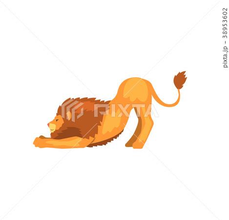 Powerful lion stretching, wild predatory animal 38953602