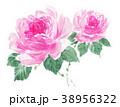 花 薔薇 ピンクのイラスト 38956322