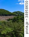 伐採 林業 森林の写真 38958650