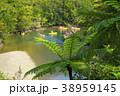 奄美大島マングローブ原生林 カヌーとヒカゲヘゴ 38959145