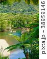 奄美大島マングローブ原生林 カヌーとヒカゲヘゴ 38959146