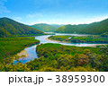奄美大島 マングローブ原生林 38959300