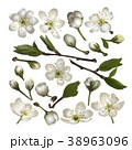 フラワー 花 芽のイラスト 38963096