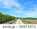 晴れ 沖縄 波照間島の写真 38972971