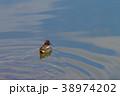 コガモ 水鳥 鳥の写真 38974202