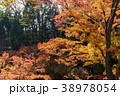 北野天満宮 - 紅葉 38978054