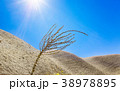 Dried plant under rays of hot sun in de 38978895