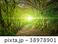 Bright light and footpath in green forest 38978901