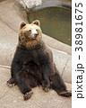 昭和新山 熊 ヒグマの写真 38981675