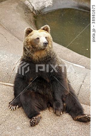 昭和新山熊牧場で座り込む熊。2014/9/24 38981675