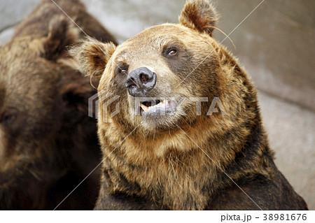 昭和新山熊牧場の熊たち。2014/9/24 38981676