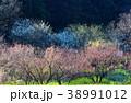 春 38991012