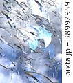 鳥 ガラス 自由のイラスト 38992959
