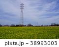 明和町、菜の花畑 38993003