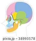 頭蓋骨 骨 頭のイラスト 38993578