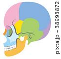 頭蓋骨 骨 頭のイラスト 38993872