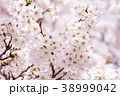 桜 花 植物の写真 38999042