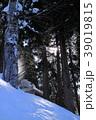 しずり雪 雪 木の写真 39019815