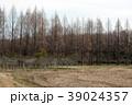 樹林 冬枯れ 森林の写真 39024357